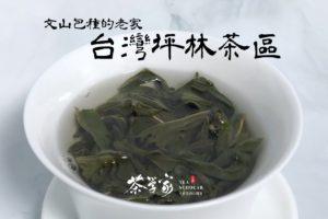坪林茶產區-台灣茶-文山包種-青心烏龍-有機茶