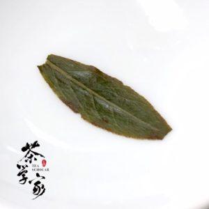 輕發酵烏龍茶-中發酵烏龍茶-綠葉鑲紅邊-烏龍茶-發酵-茶學家